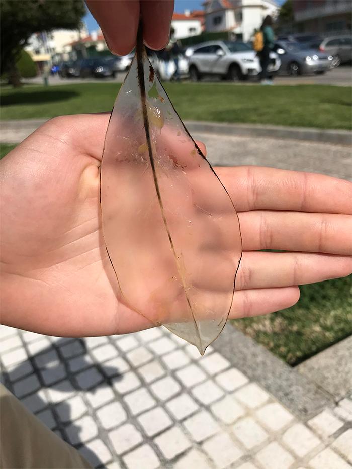 worn down transparent leaf sitting on a fountain