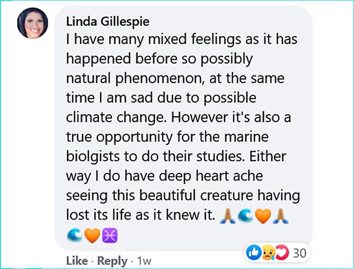 dead opah moonfish oregon comment linda gillespie