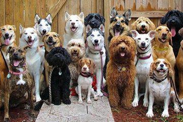 group dog photos