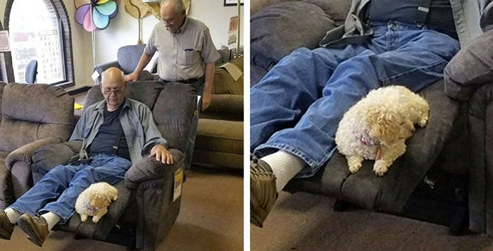 old people being wholesome grandfather bringing dog to furniture store