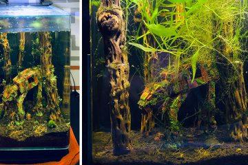 star wars themed fish tank