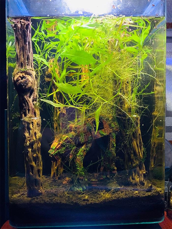 star wars-themed fish tank at-at