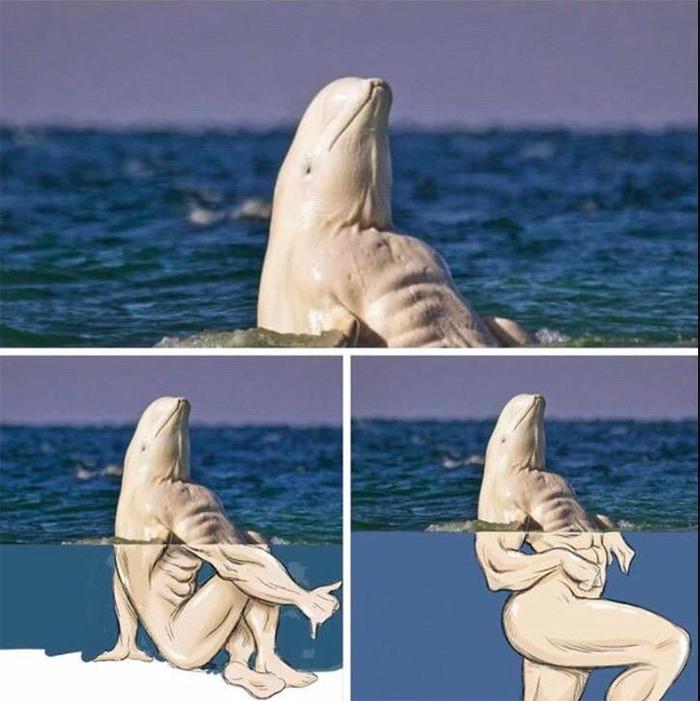 thanks i hate it beluga whales