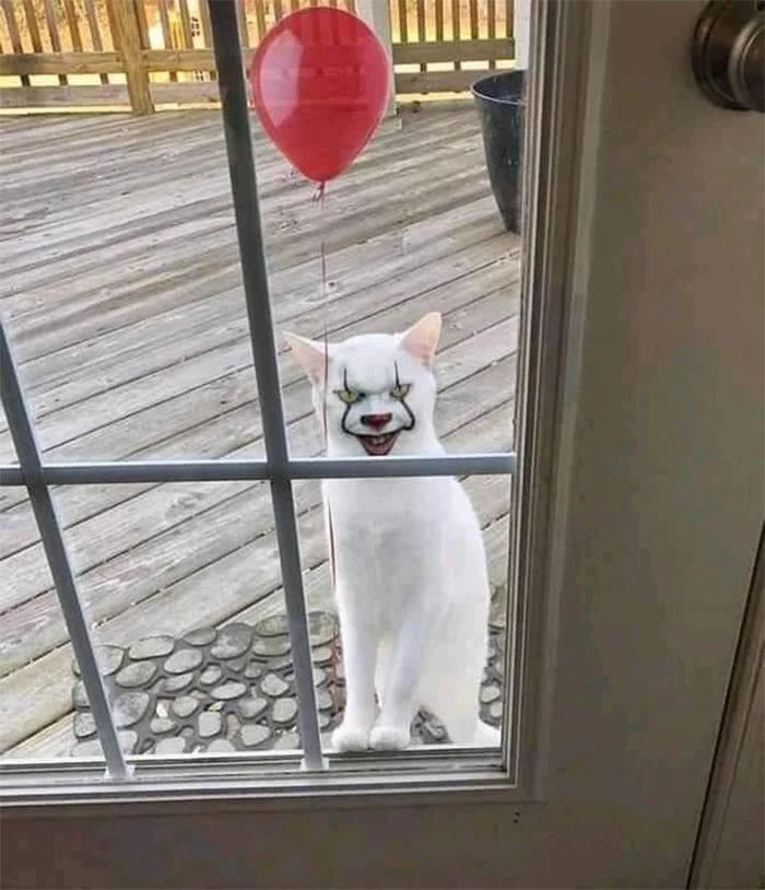 uncomfortable photos pennywise cat