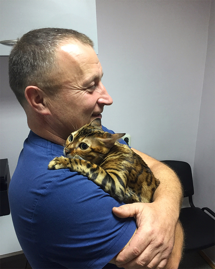 beautiful cat hugs vet