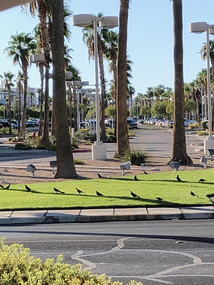 birds lined up for limited shade
