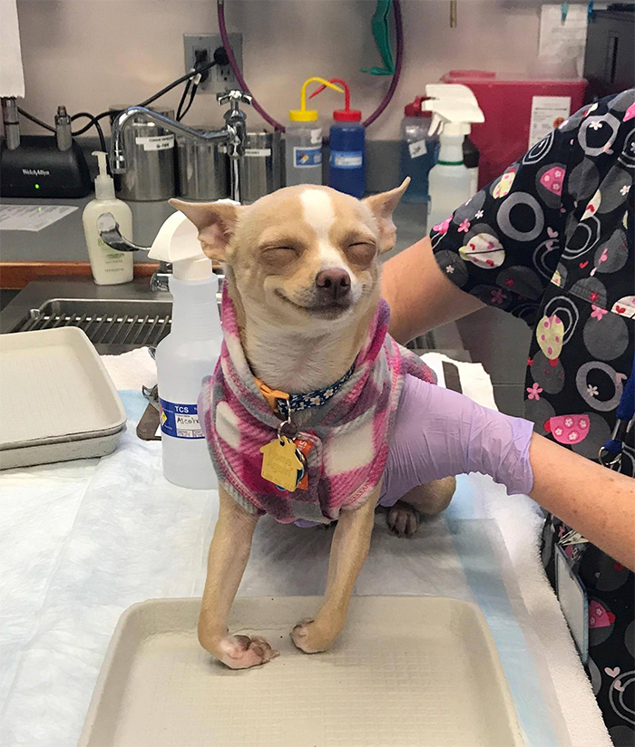 cute pets at the vet dog ate pot brownie