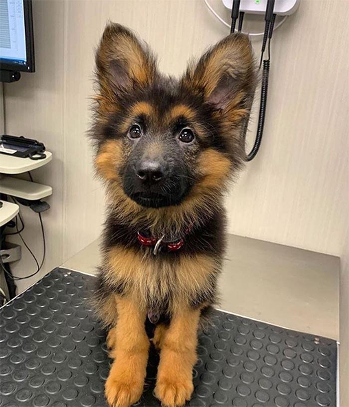 cute pets at the vet dog ears