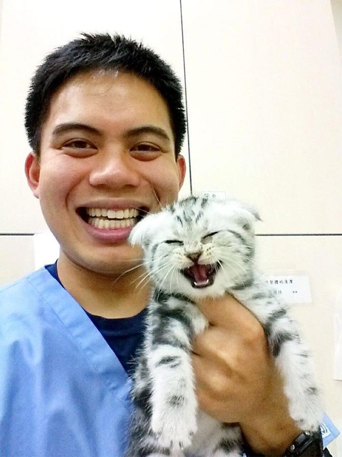 cute pets at the vet happy kitten