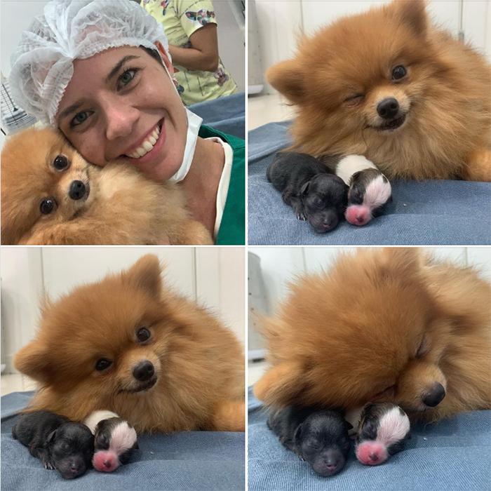 cute pets at the vet proud mum