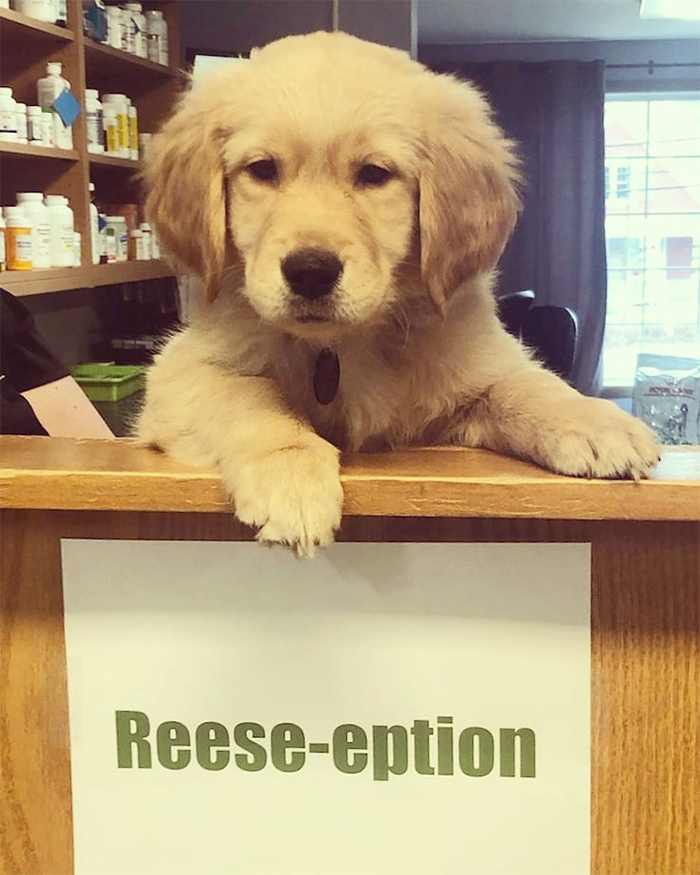 cute pets at the vet reese-eption