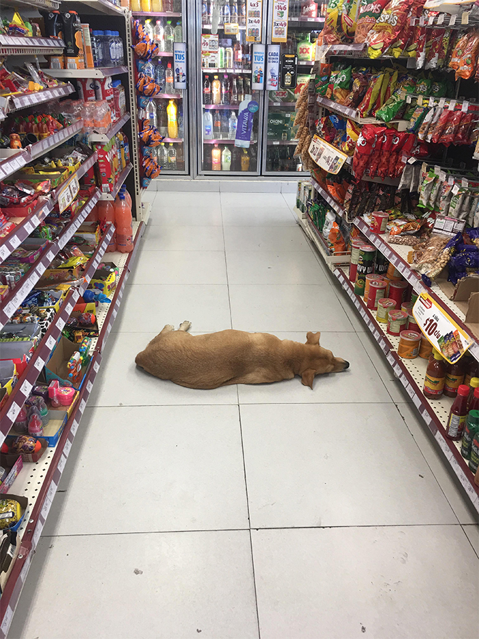 dog cooling off inside convenience store