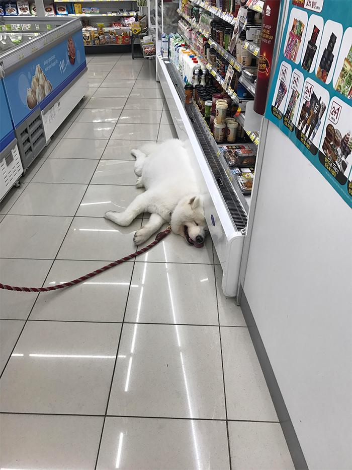 dog cooling off store refrigerator