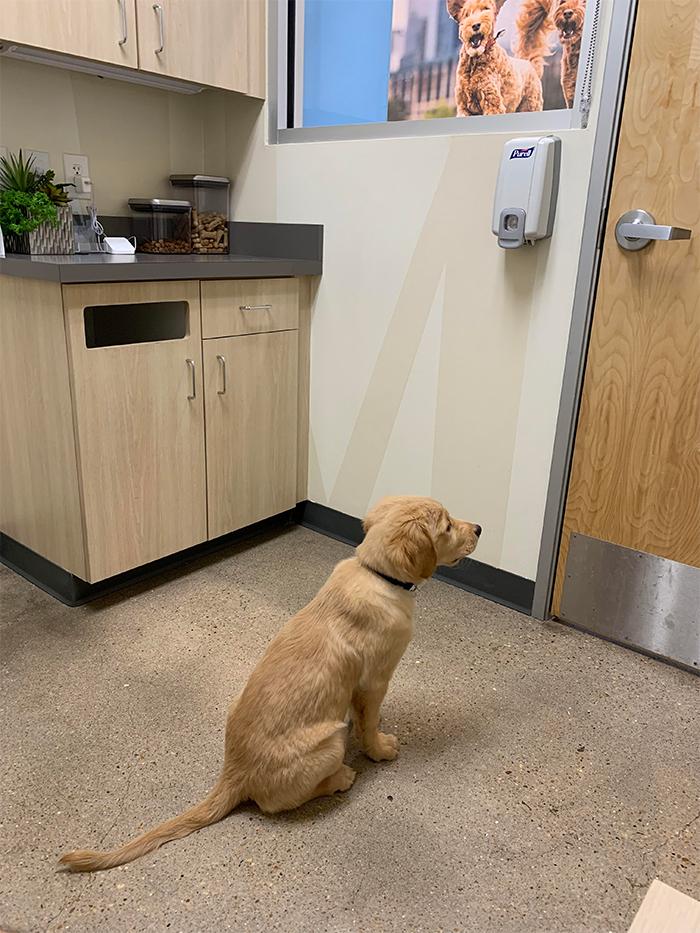 dog waiting for his crush vet