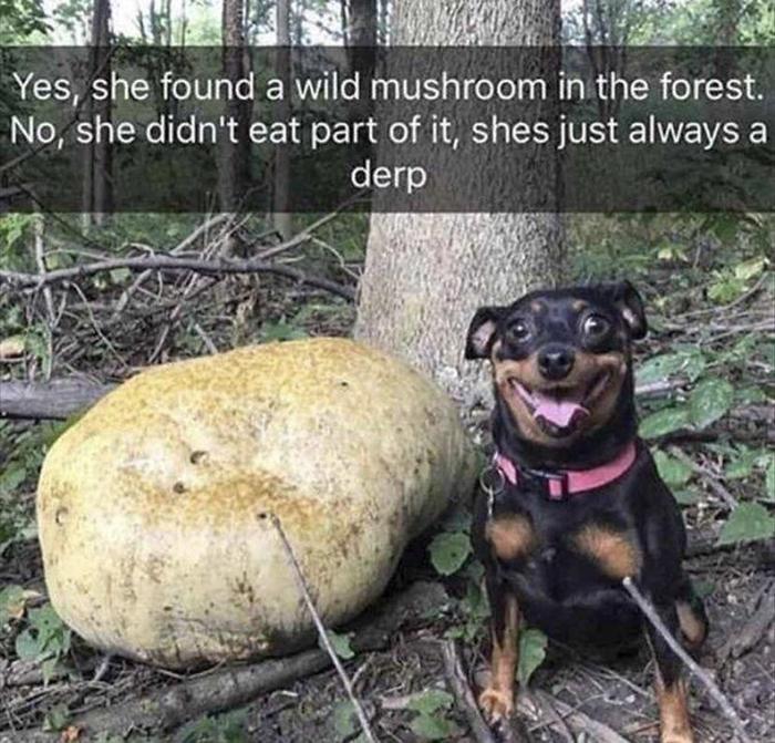 dorky pup found wild mushroom in forest