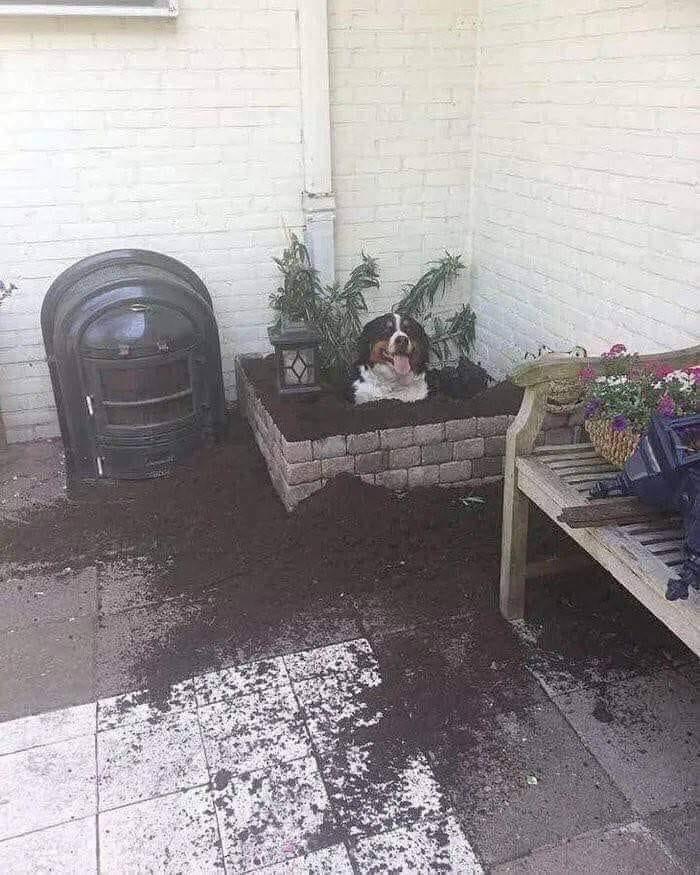 dorky pup inside plant box