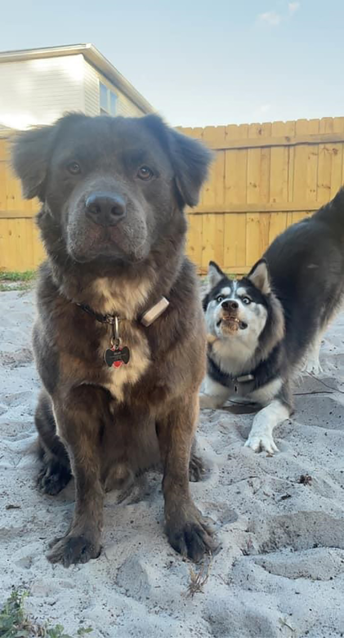 dorky pup photobombing another pup