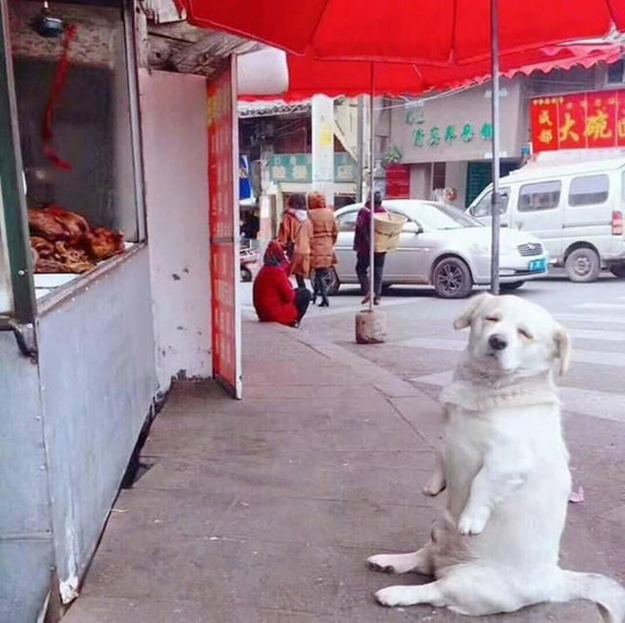 dorky pup sitting in front of food stall