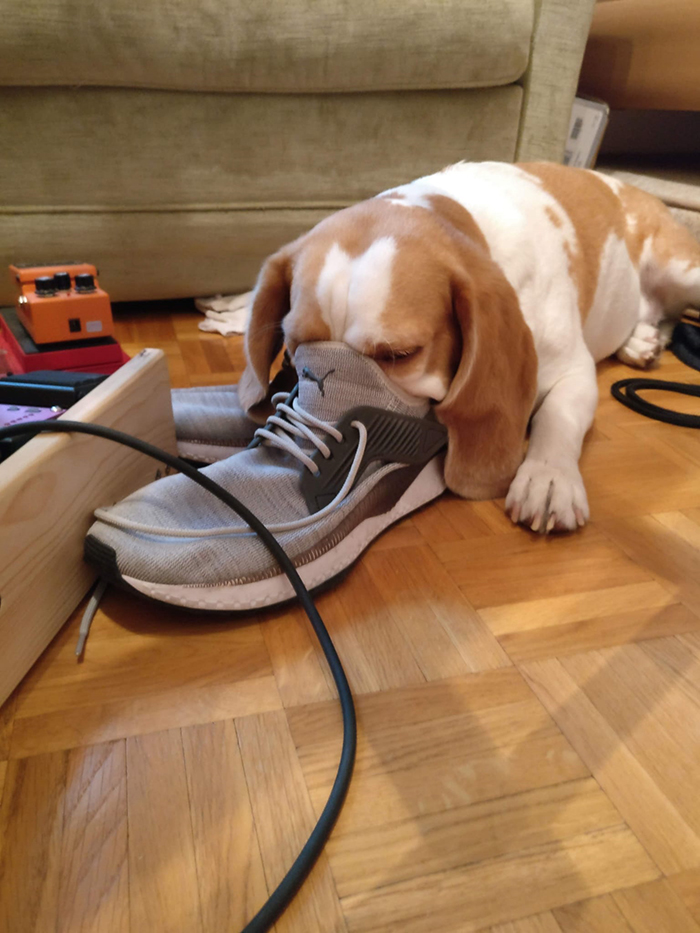 dorky pup sniffing a shoe