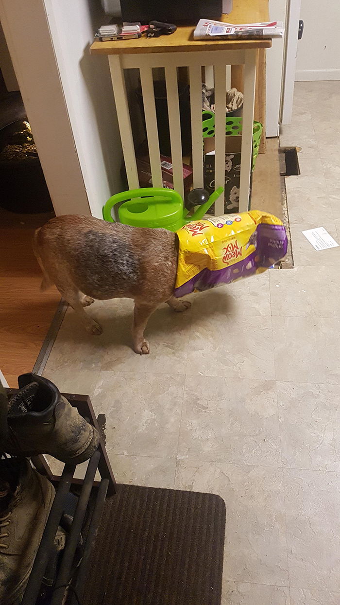 dorky pup with cat food packaging stuck in head