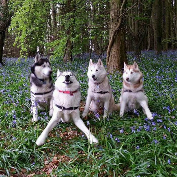 dorky pups photoshoot