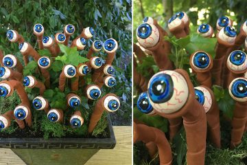 eyeball plants