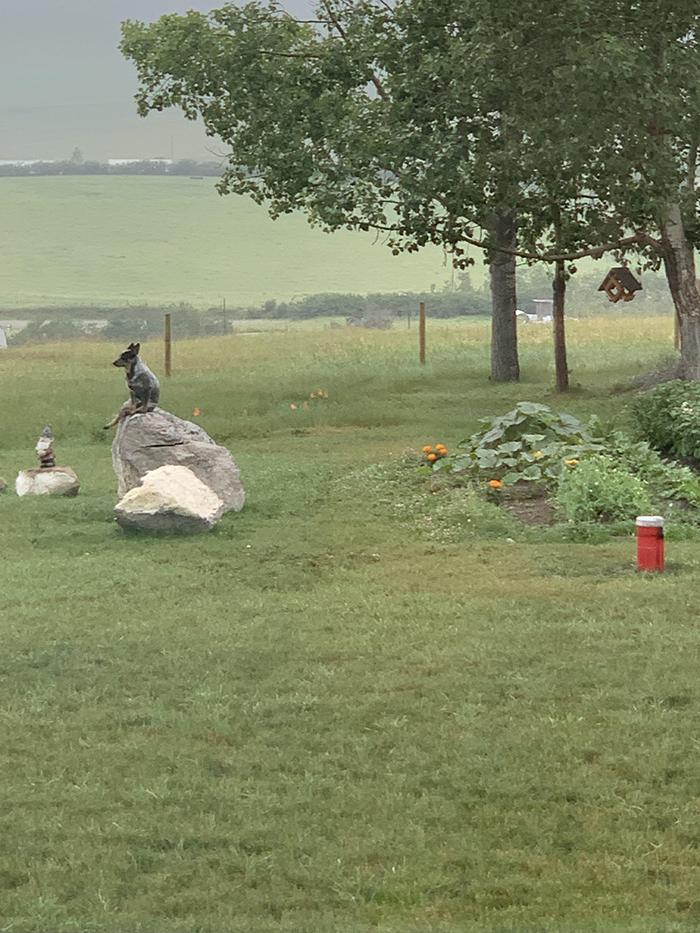 funny australian cattle dog sitting on rock