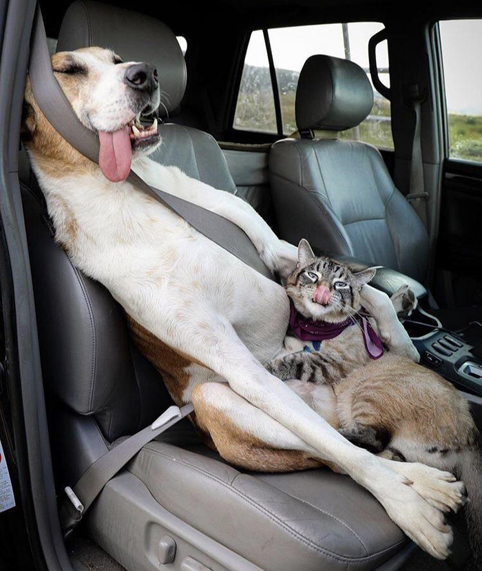 funny dog and cat sticking their tongues out