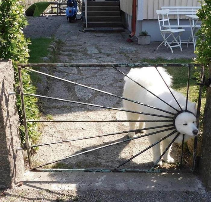 funny dog head inside gate hole