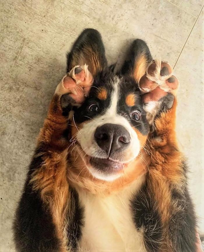 funny dog peekaboo pose