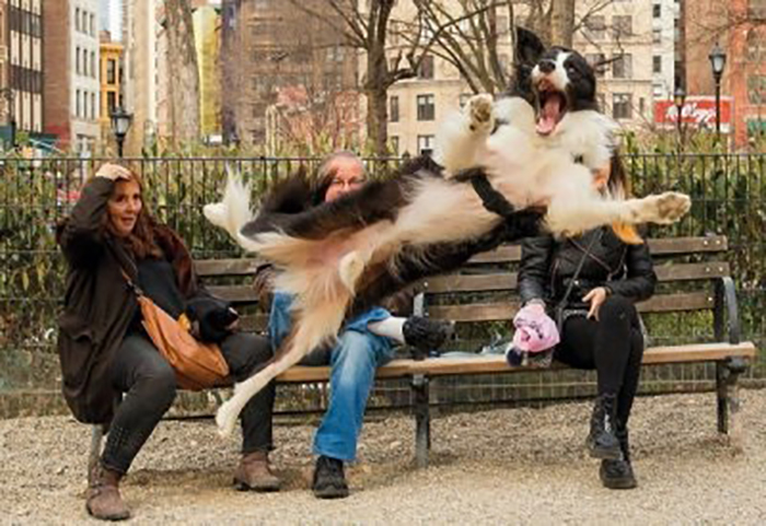 funny dog photobombing
