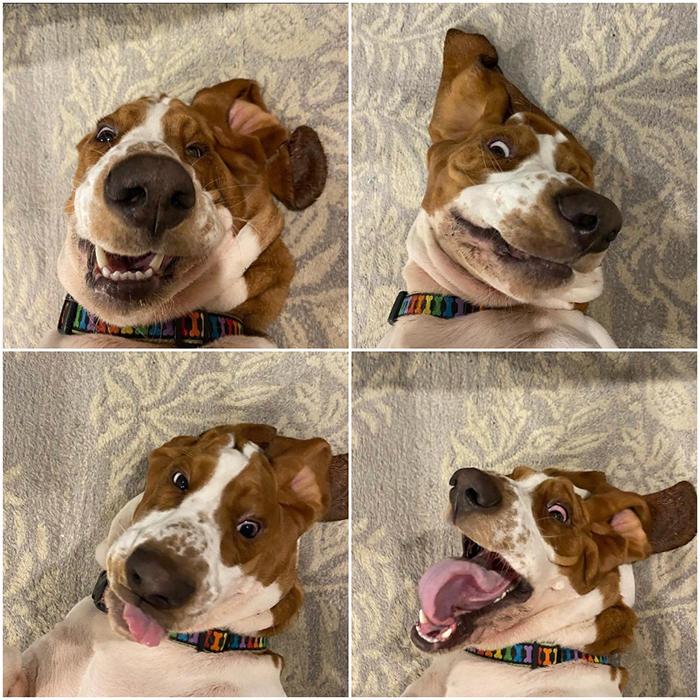 funny dog selfie shots