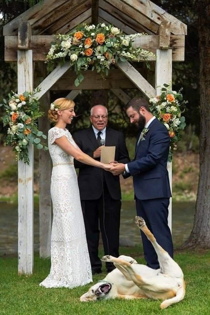funny dog upstaging bride and groom