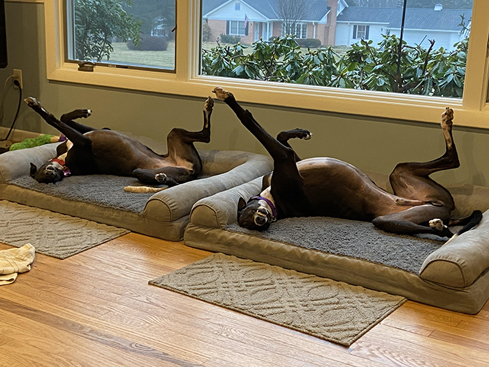 funny dogs doing the same pose