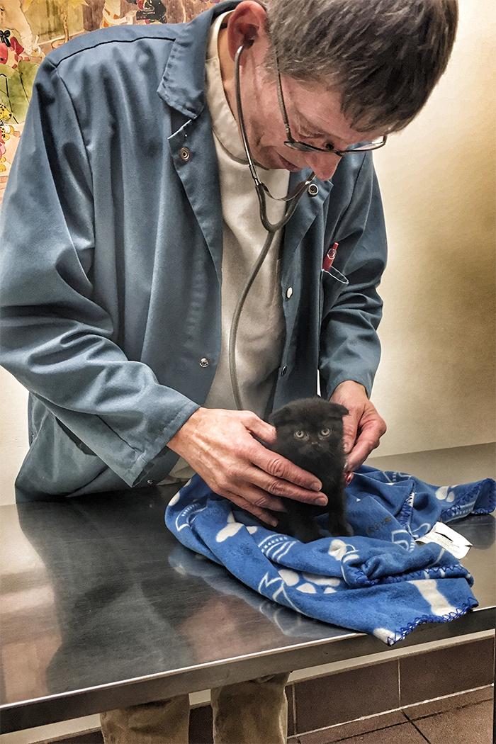 little grumply black kitten vet checkup