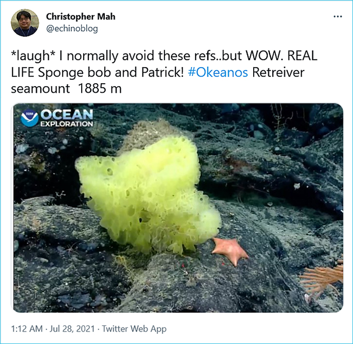 real-life spongebob and patrick