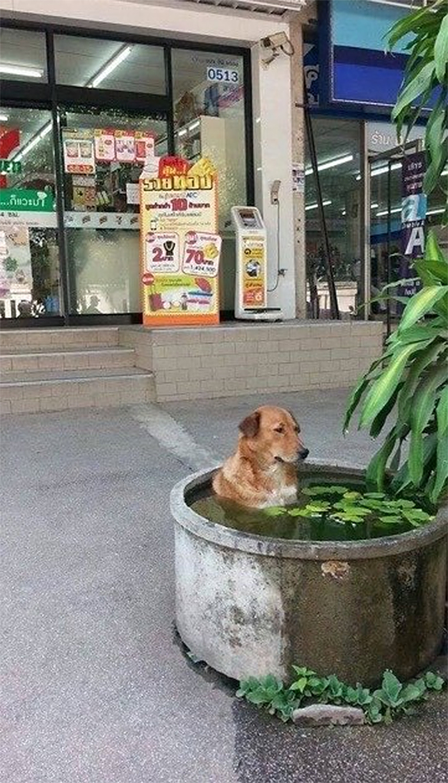 summer heatwaves chilling dog