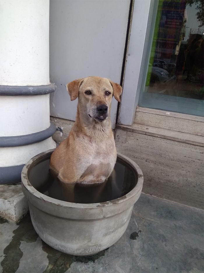 summer heatwaves dog chilling