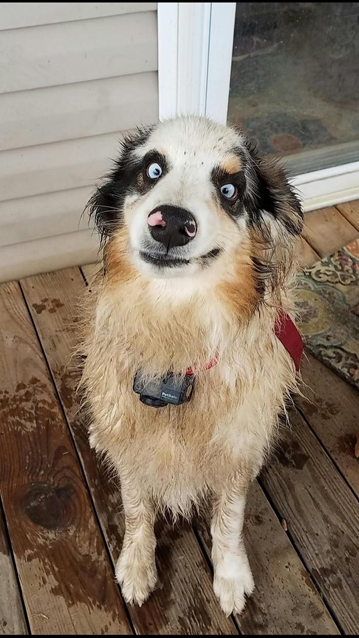 wet pup dorky face