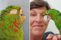 Prosthetic Beak