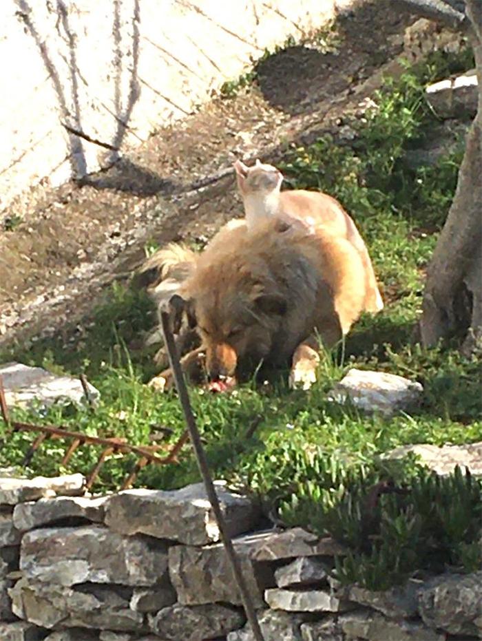 canine and feline master servant relationship