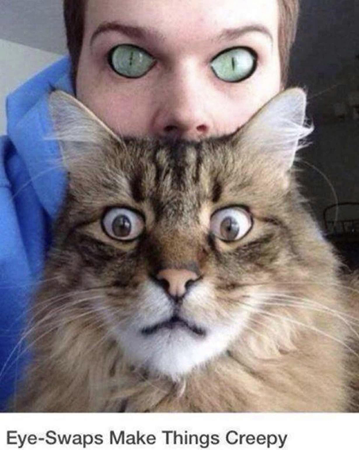 cat and owner eye swap