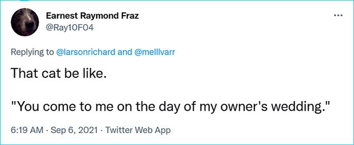 cat ring bearer comment earnest raymond fraz