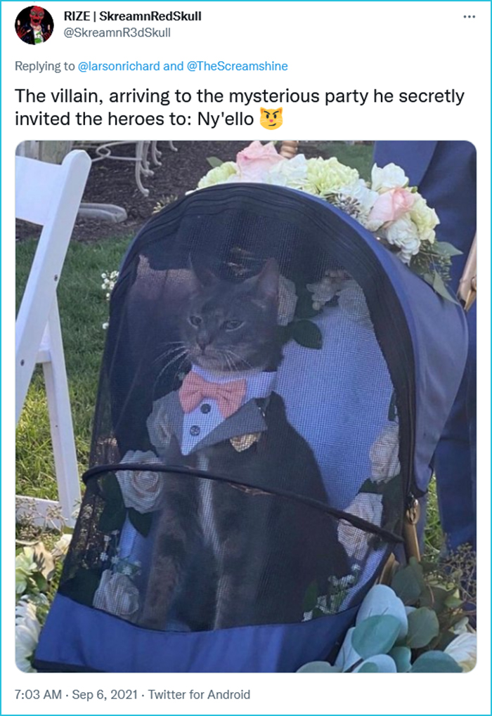 cat ring bearer kingly face meme