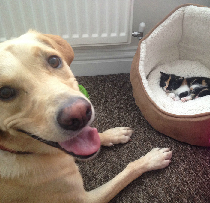 cats and dogs being friends
