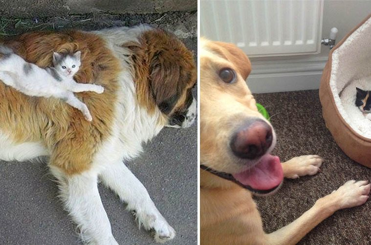 cats in charge of dogs
