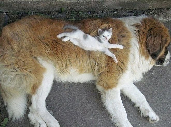 cats using dogs as body pillows