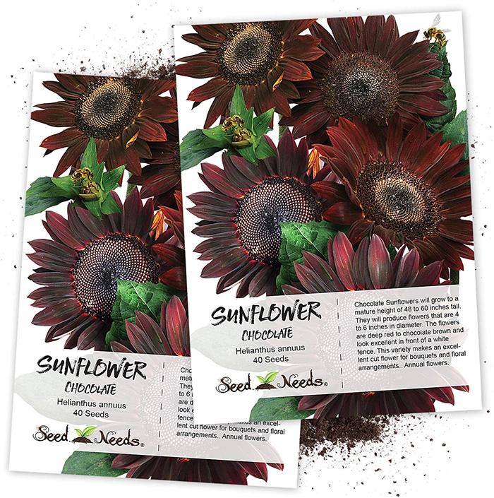 chocolate sunflowers seeds