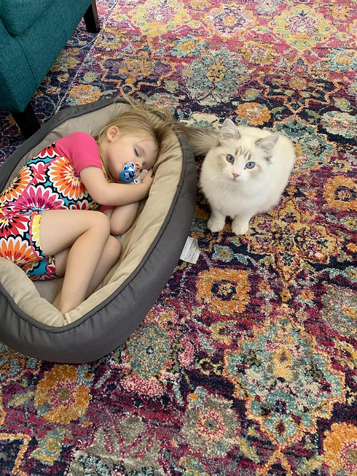 girl sleeping on cat's bed