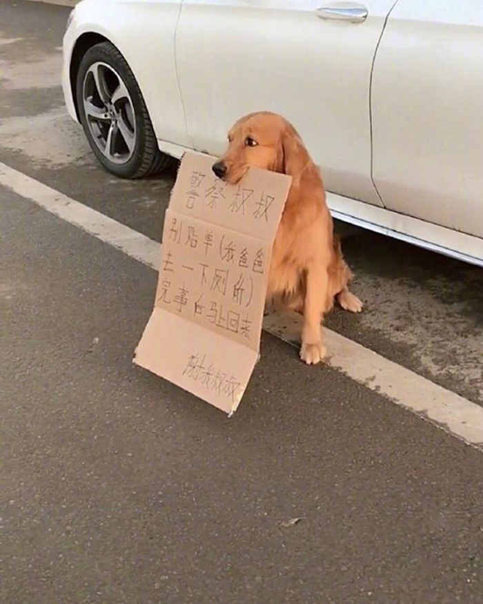 pet dog with note to police
